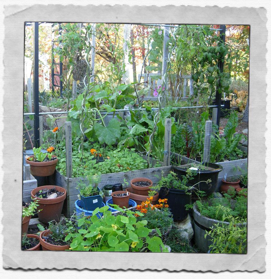 My Kitchen Garden Party