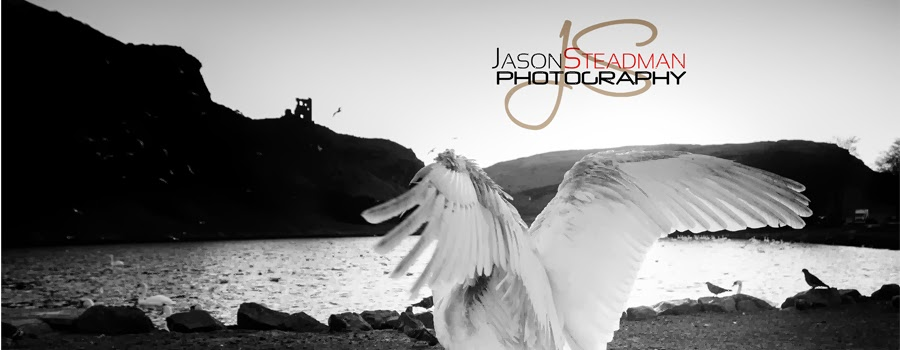 Jason Steadman Photography