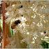 Αντιδράσεις από τους μελισσοκόμους για τους ψεκασμούς στους φοίνικες του Λαυρίου