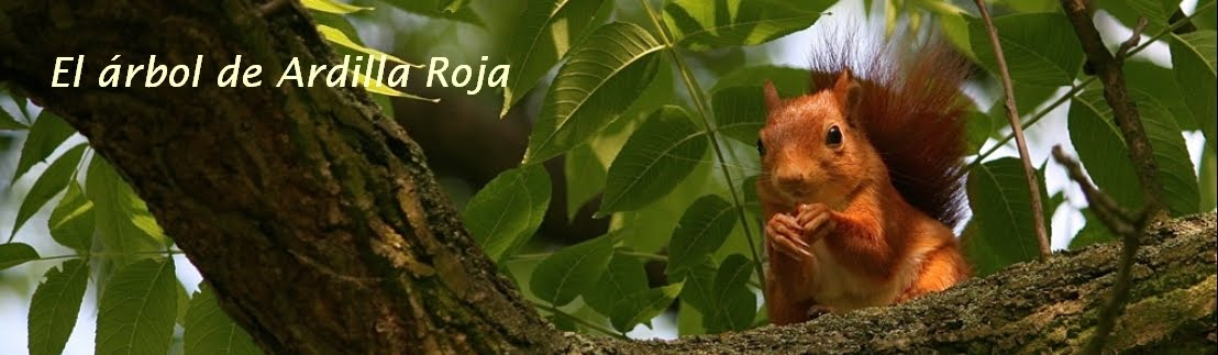 El rbol de Ardilla Roja