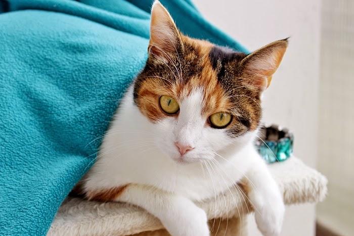 cutest cats, nejroztomilejší kočky, funny pics, vtipné obrázky