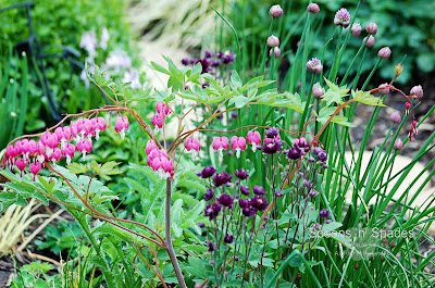 Garden Favourites ~ Spoons 'n' Spades