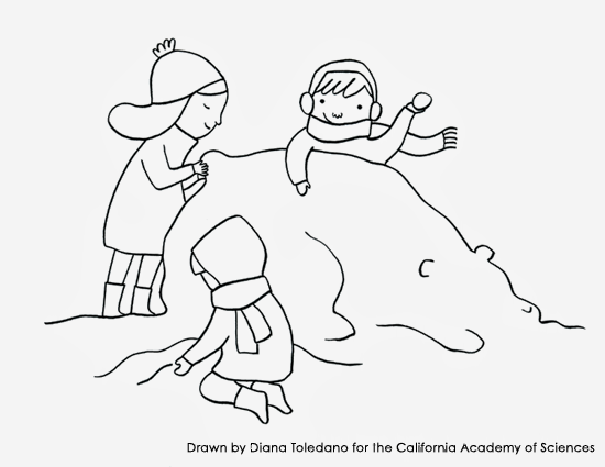 Coloring page with a snow-bear drawn by Diana Toledano for the California Academy of Sciences