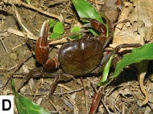 http://sciencythoughts.blogspot.co.uk/2014/10/a-new-species-of-montane-freshwater.html