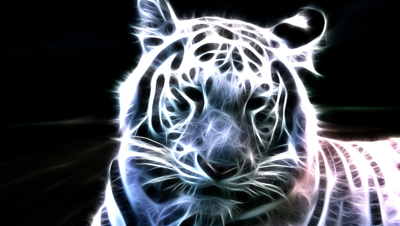 White bengal tiger wallpapers - photo#18