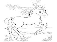 Buku Mewarnai Binatang Liar, Kuda