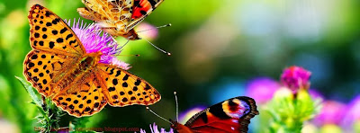 Facebook couverture vivante papillon