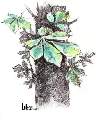 dessin de nature (feuille châtaignier)