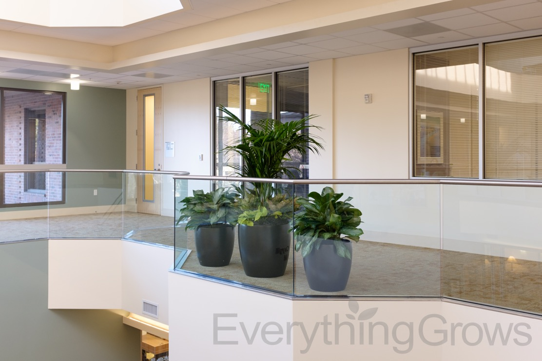 interior landscaping office. Putting The Finishing Touches Put On Your Office Design? Let Our Experienced Everything Grows Interior Landscaping Design Team Lend A Hand!
