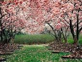 flores são...