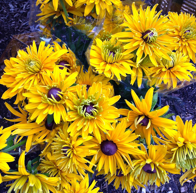 flowers_beautiful_rudbeckia_farmers_market