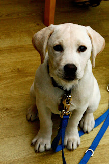 Sally the Adorable Puppy came to Stamp with Stampin' Up! Demonstrator Bekka Prideaux