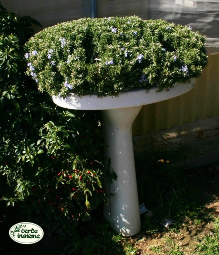 Contenitori Per Piante : Contenitori per piante aromatiche