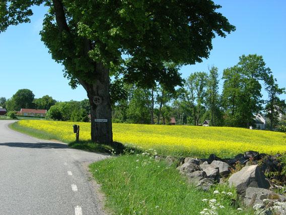 vacanze in Svezia