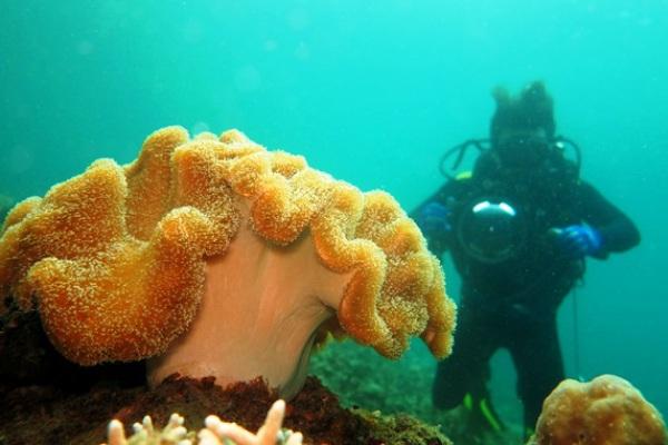 Bawah Laut Jailolo, Halmahera Barat, Maluku Utara. ZonaAero