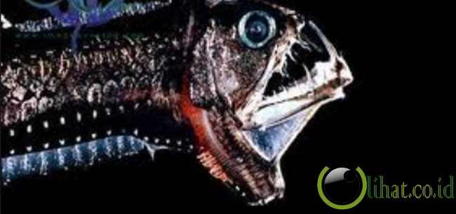 Ikan yang Hidup di Lautan Paling Dalam