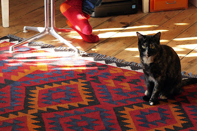 hand-woven wool rug with dark tortoiseshell cat