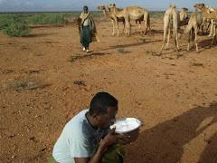 Investeer in Somalische kamelen nu! Durfkapitaal? Groeikapitaal! Veilig en duurzaam beleggen.