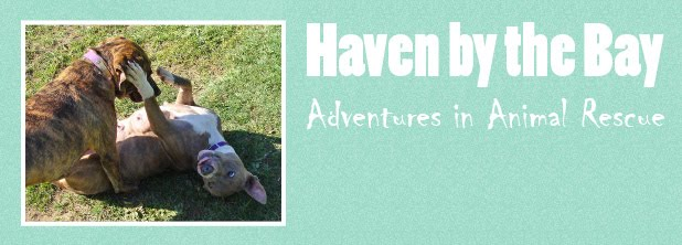 Haven by the Bay - Adventures in Animal Rescue