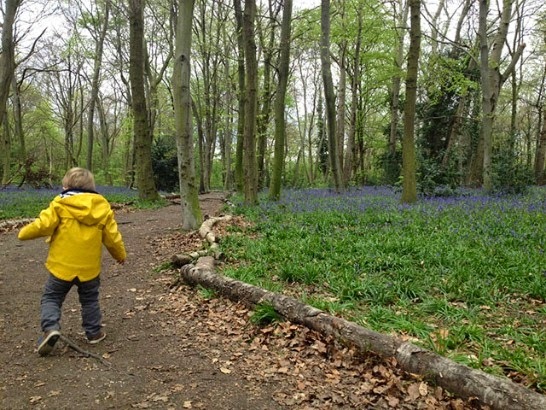 Little boy in bluebell wood in Wanstead Park