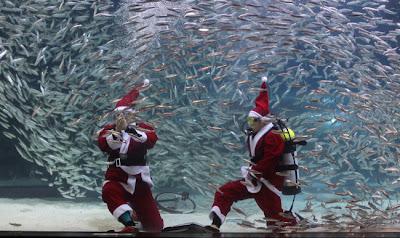 berenang bersama ikan sardin