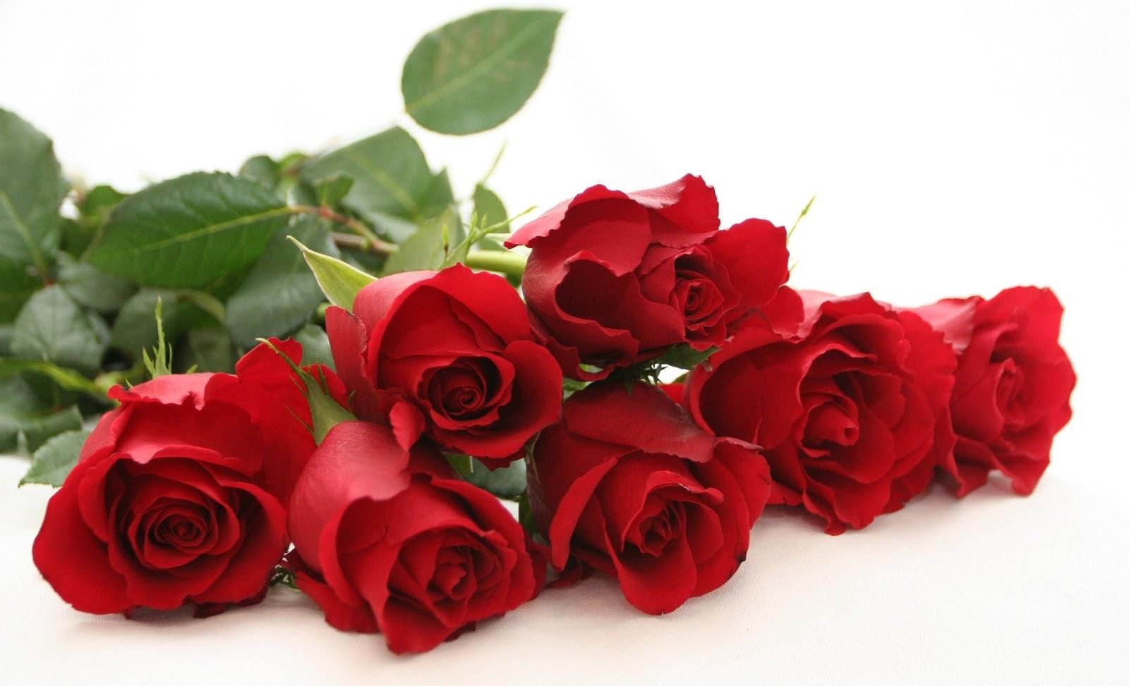 http://4.bp.blogspot.com/-7RTZXz24k48/URI3aUQH5yI/AAAAAAAAA0Q/njnNnoYGM6g/s1600/happy-rose-day-rose-images-2013.jpg