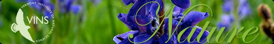 VINS Nature Blog