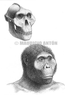 hominidos Paranthropus boisei