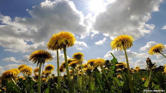 النباتات التلقائية