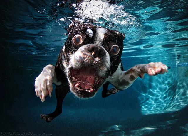 funny dog picture wallpaperwallpaper background wallpaper