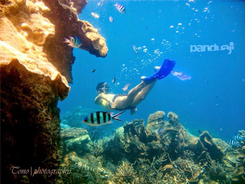 Underwater di Karimunjawa