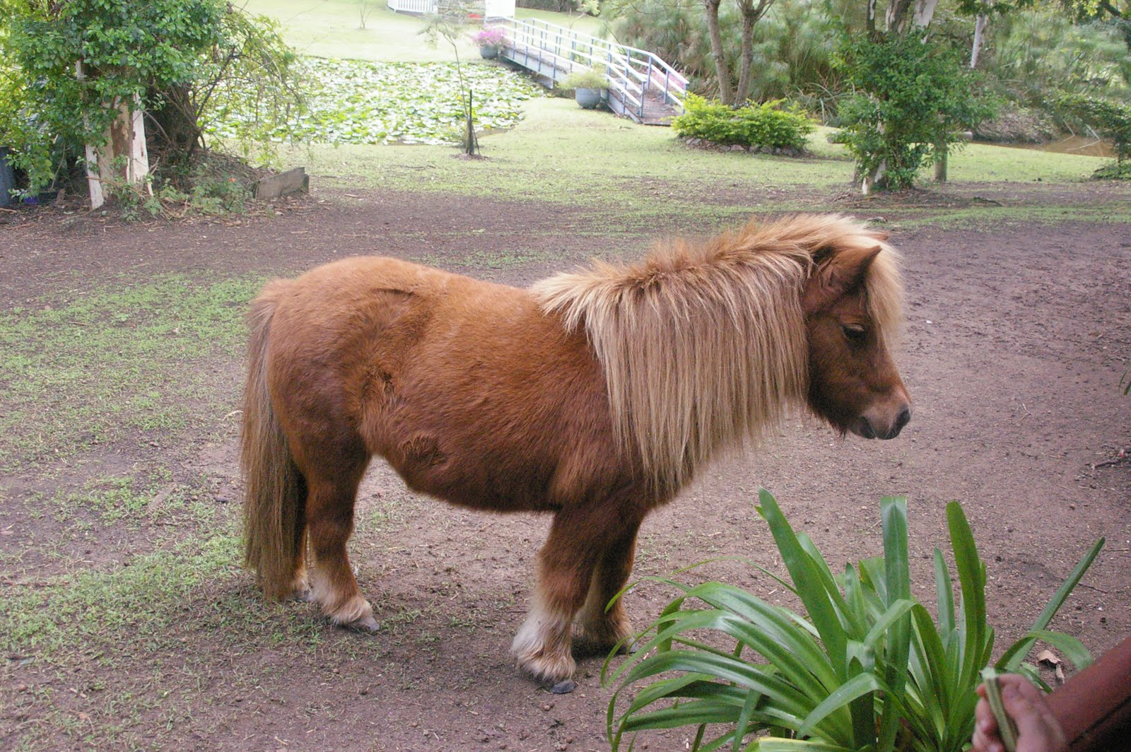 Horse Breeding Human Female http://domesblissity.blogspot.com/2011/05/mini-mates-miniature-horse-farm.html