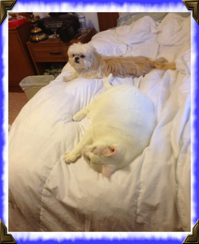cat and dog on a bed