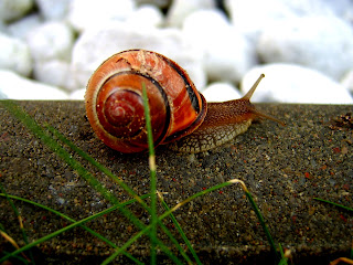 Snails Wallpapers