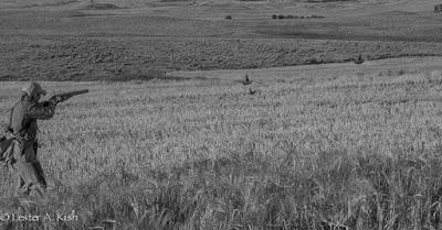 Hunter aims at Hungarian partridge