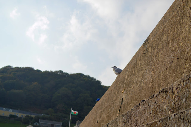 Seagull on beach wall