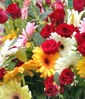close up of sea of red, white, pink, and yellow flowers