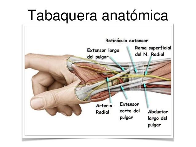 Anatomía Argerich Escuela de instrumentación quirúrgica: MUÑECA Y MANO