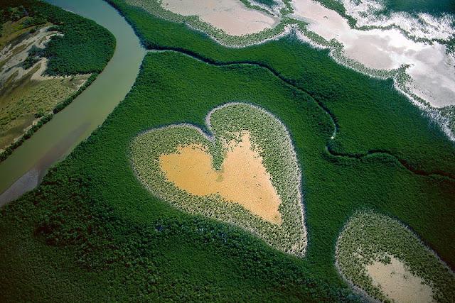 Мангровые заросли в Новой Каледонии