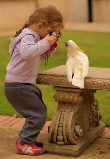funny picture: baby makes photo of parrot
