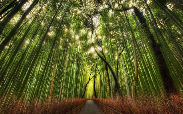 Bamboo Nature6