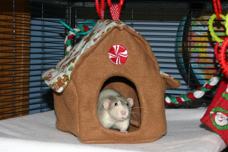 gabe in the gingerbread house  this was an earlier design with eaves but i found that the added  plexity was not worth the extra effort  ratropolis  new hammock added to rat hammock tutorials  the house  rh   ratropolis blogspot