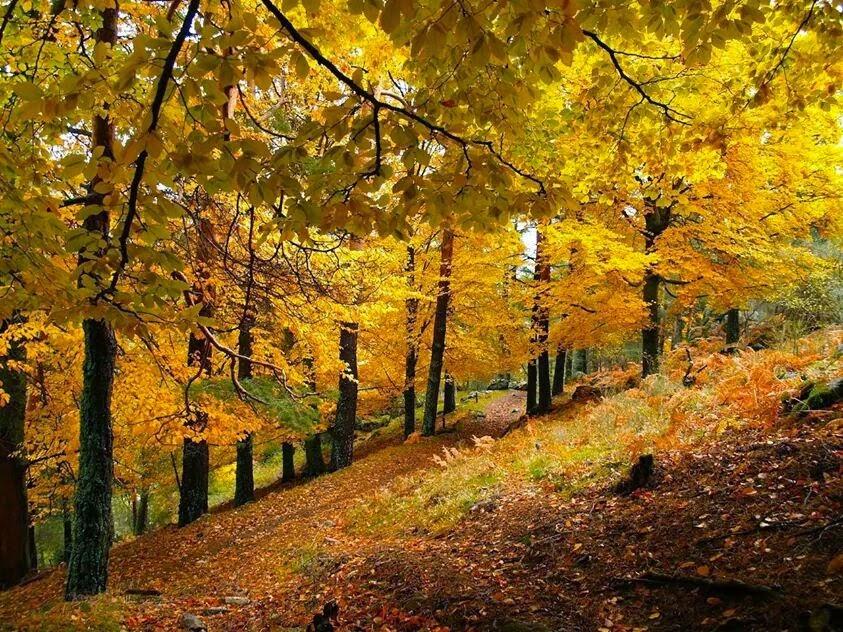 bosque para Cosas que siento