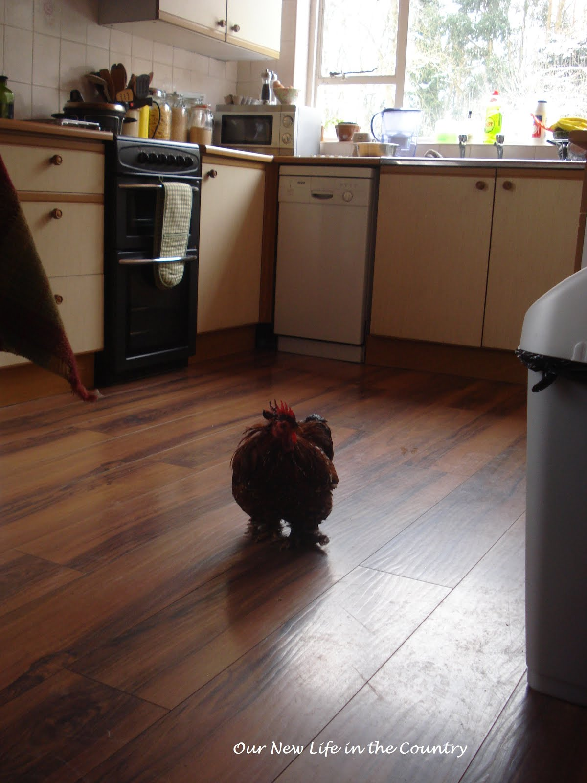 Our new life in the country a cockerel in my kitchen for Our life in the kitchen