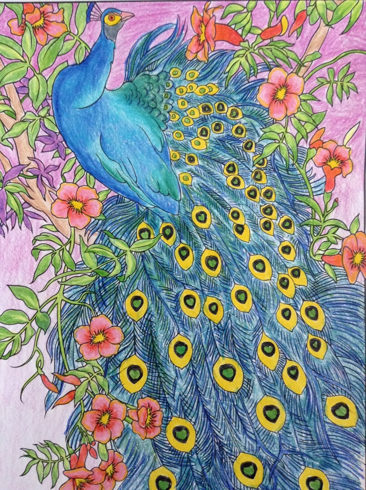 Peacock Coloring Page | Day-Dreamer, Night-Thinker