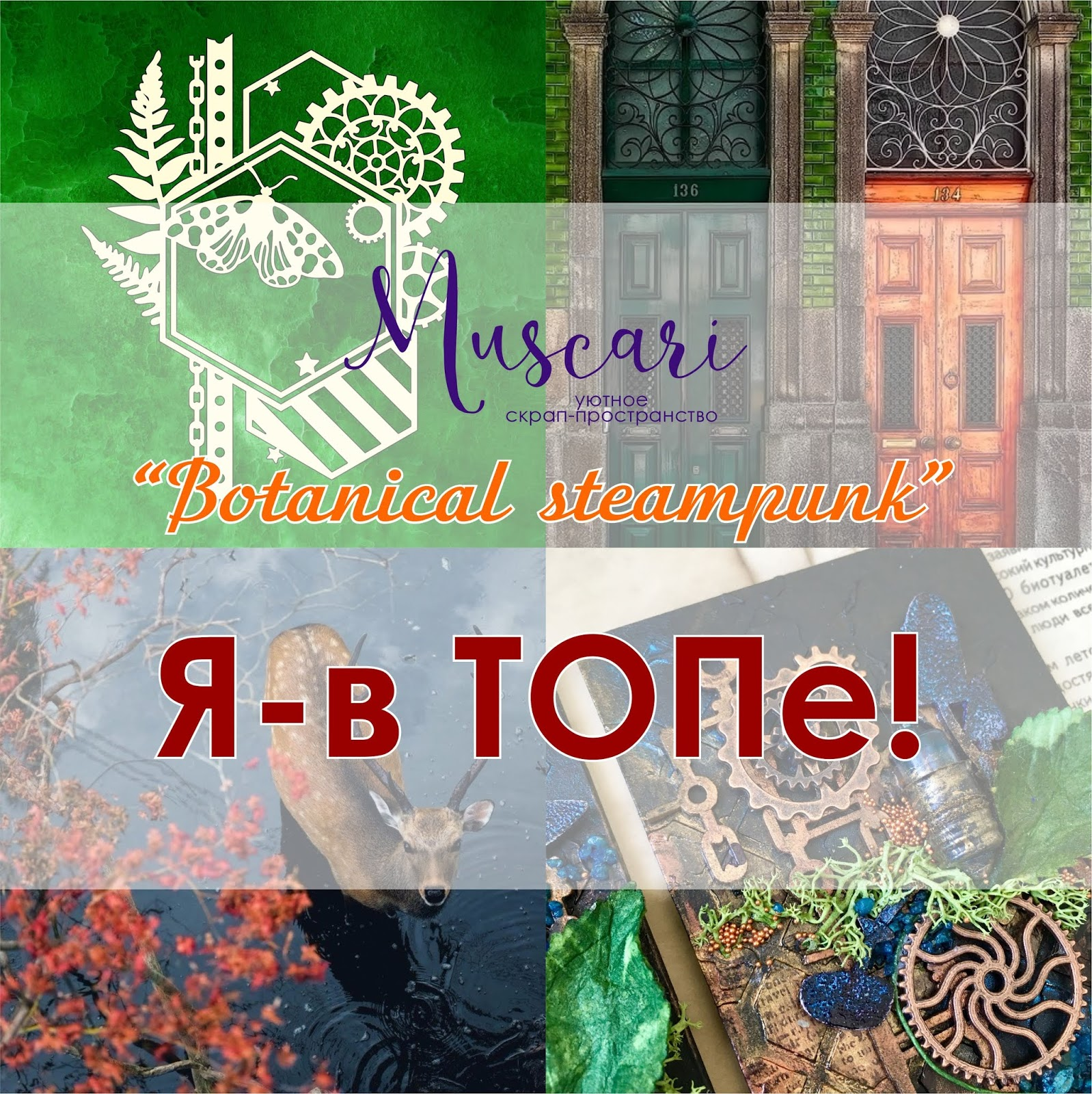 TOP 5 - Muscari