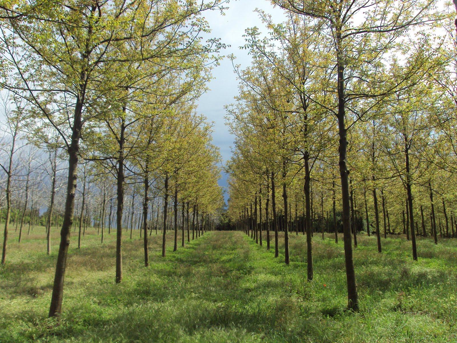 Bosques naturales bosques naturales da por concluido el - Ambientadores naturales para la casa ...