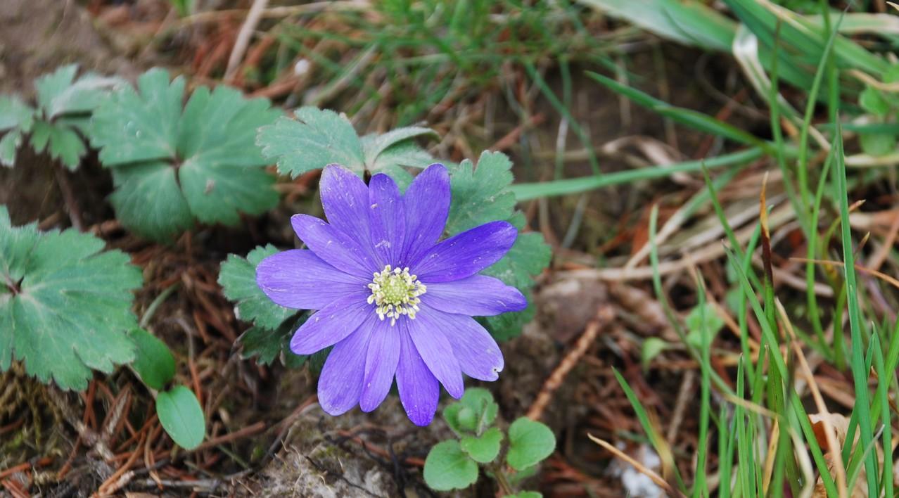 Biodiversit dans notre jardin fleurs sauvages dans le for Fleurs dans le jardin