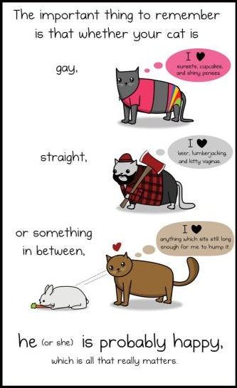Mkbm Junior How To Tell If Your Cat Is A Raging Homosexual