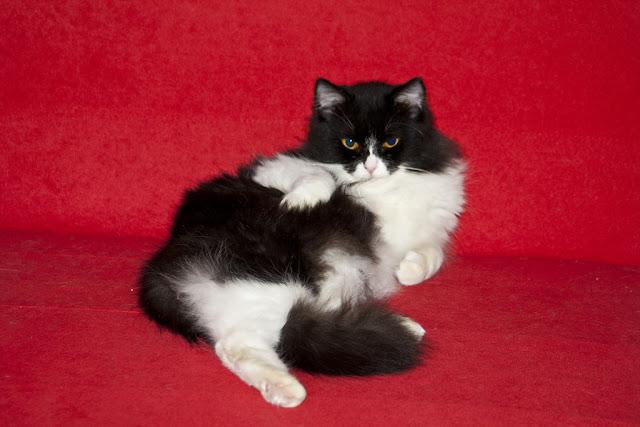 funny cat pictures, cute cat